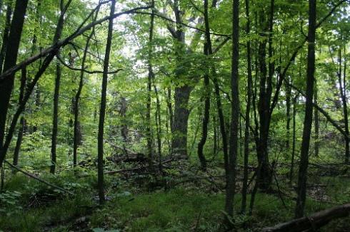 Deciduous forest in northwest corner of HELA