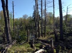 Hemlock Lake Habitat